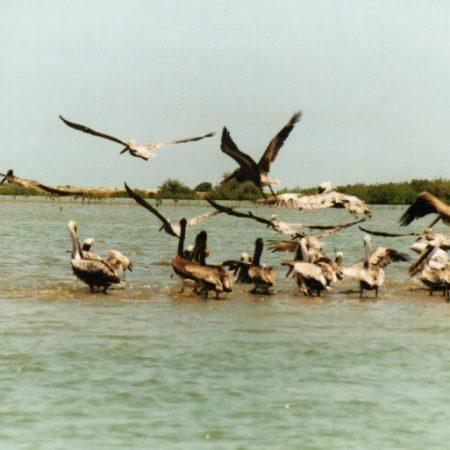 Tumbes, Mangroves and Punta Sal Beach